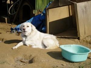 茨城県8匹犬