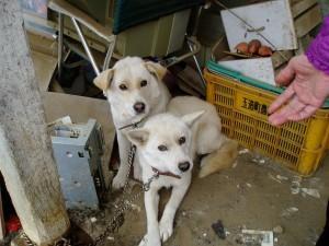 茨城県8匹犬7,8