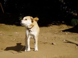 茨城県8匹犬2