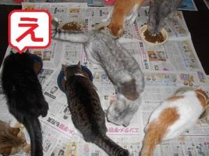 え 猫餌の時間1