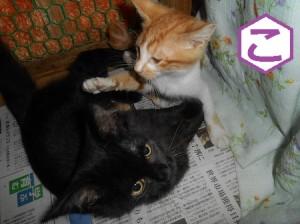 こ 子猫2匹遊んでる
