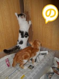 の 背伸びする子猫