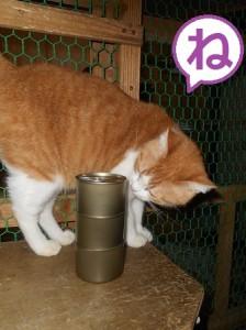 ね 猫缶とヒッポン