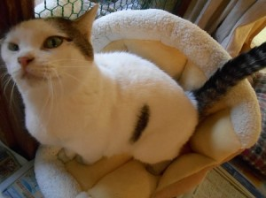 いちごの猫ベッドに座るブーちゃん