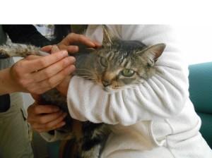 一宮矢沢さん猫2