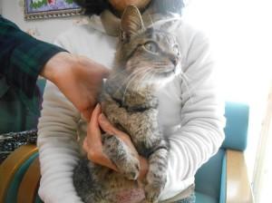 一宮矢沢さん猫1