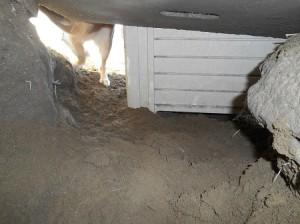 地下室内部