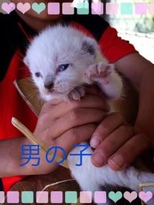 池上さん保護子猫2