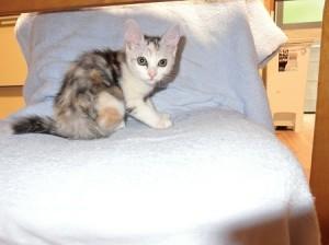 三毛猫の子猫2