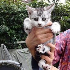 平野家子猫