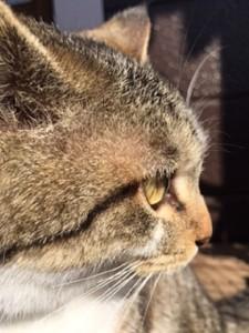 平野さんの近所の方の猫②