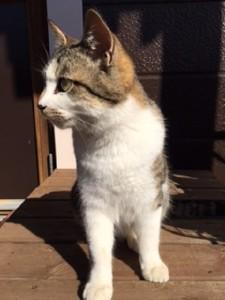 平野さんの近所の方の猫③