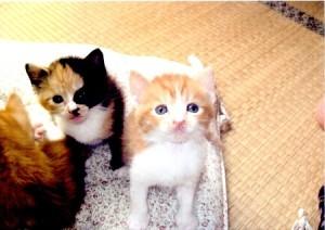 橋場さん里親募集子猫①