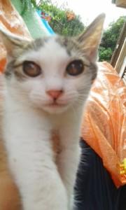9月11日募集子猫④