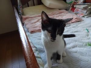 平野さん知人子猫20160911B