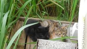 平野さん知人の母の子猫三毛と黒