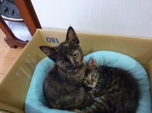 瀬川さん里親募集猫2匹