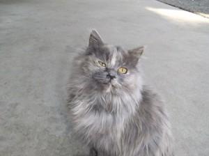 橋本さん里親募集猫①