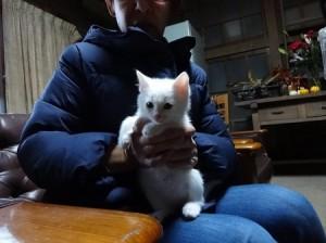 平野さん20161204猫C②