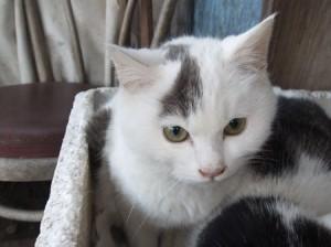 橋本さん里親募集猫②