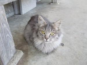 橋本さん里親募集猫④