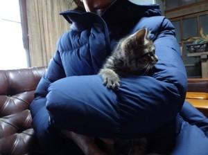 平野さん20161204猫A