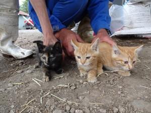平野さん知人酪農家子猫3匹